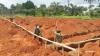 Bau der Krankenstation (11)