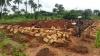 Bau der Krankenstation (15)